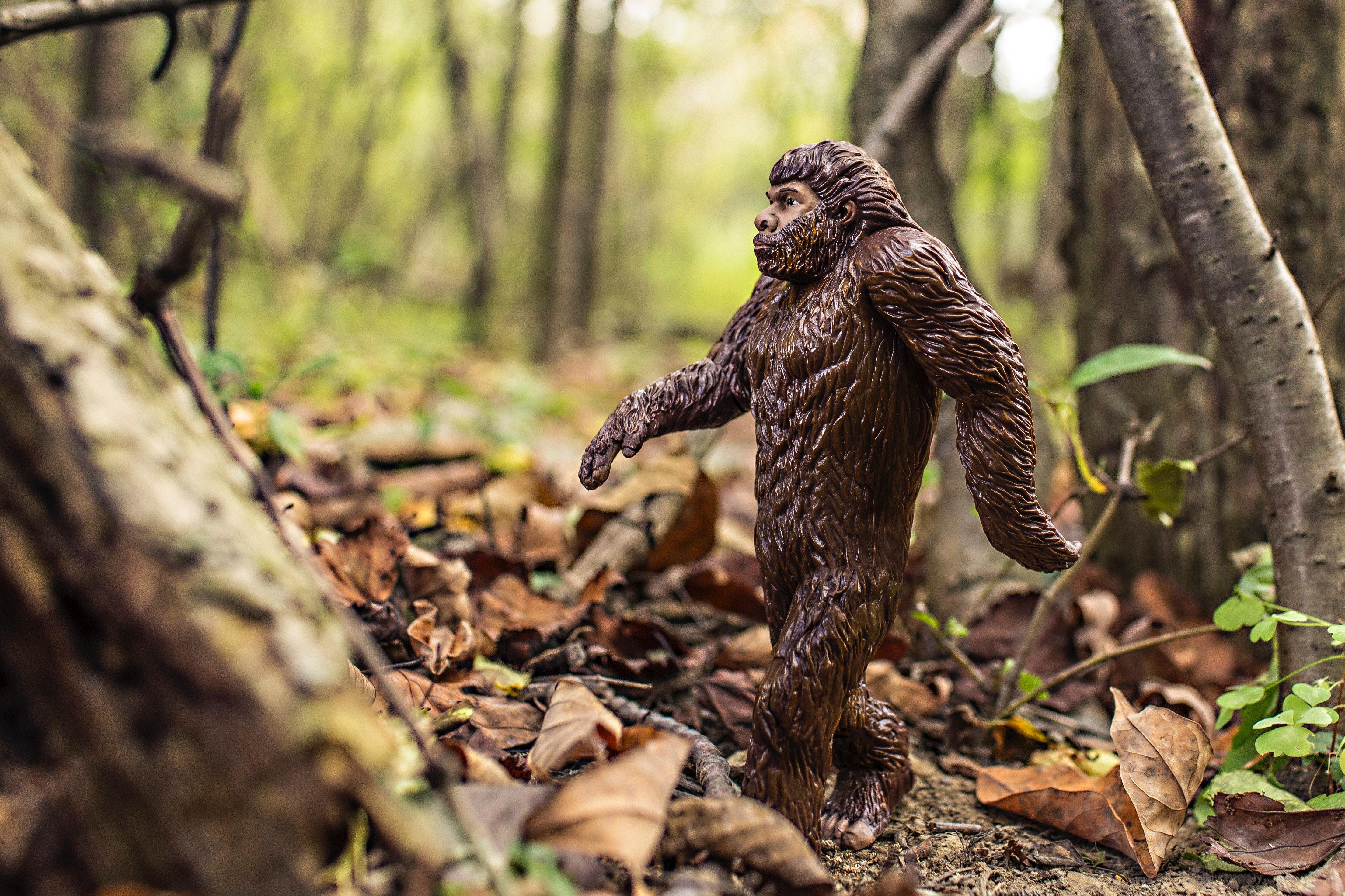 animal-bigfoot-evolution-4075